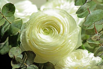 panasef_iva_reducido_para_la_ornamentacion_floral
