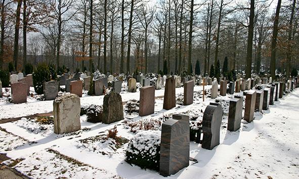 effs_cementerio_woodland