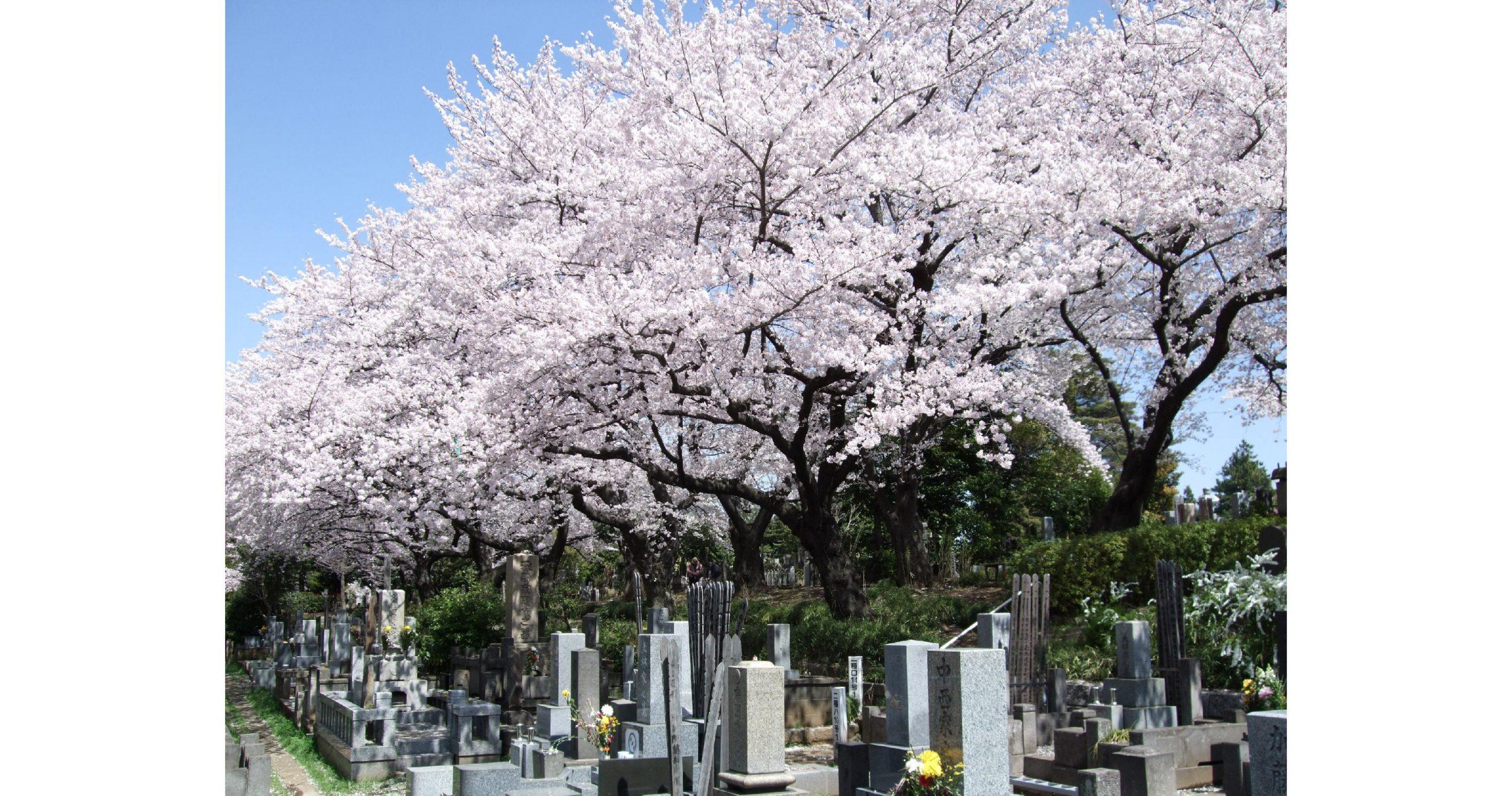 cementerio japón2