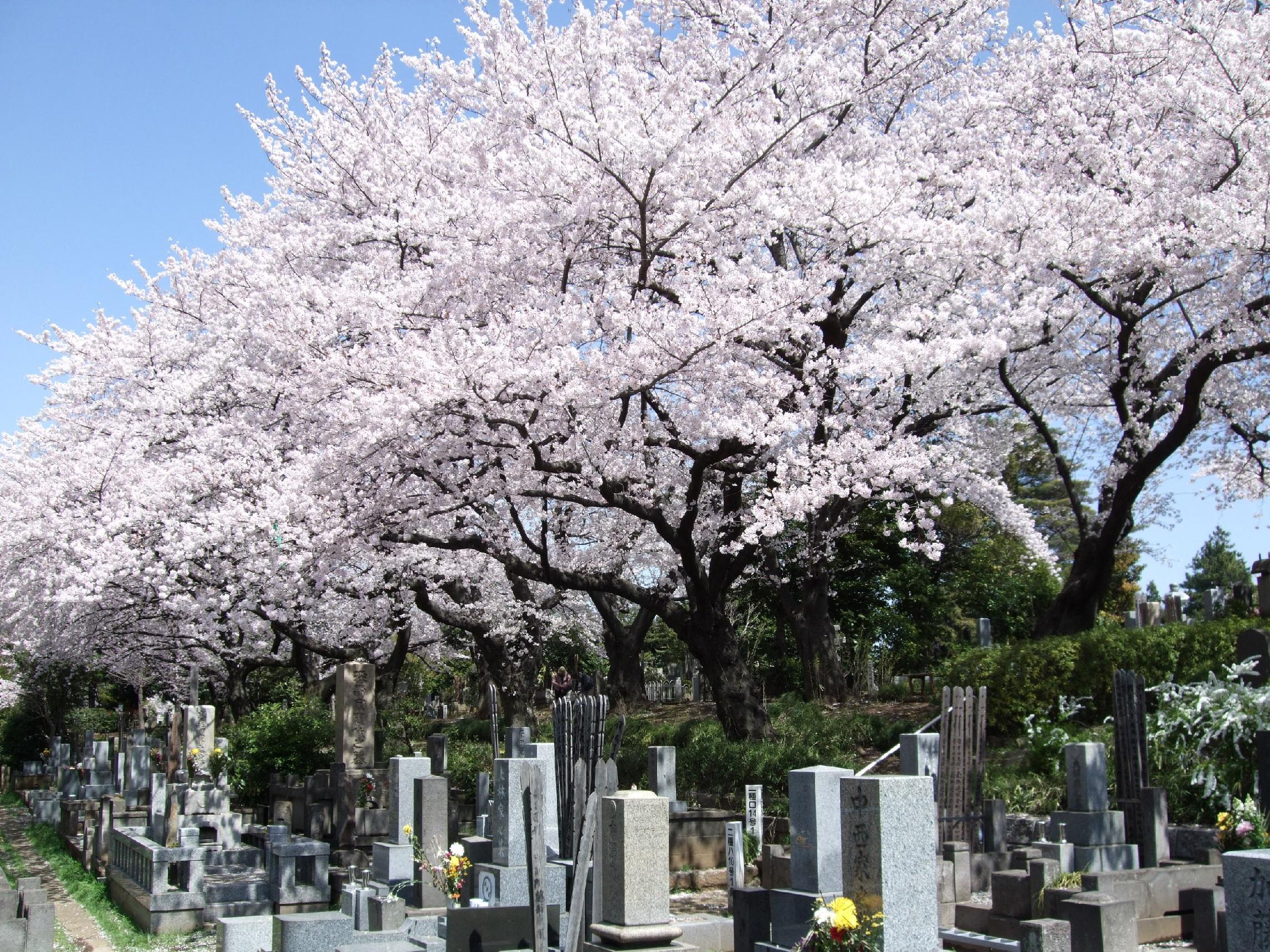 cementerio japón