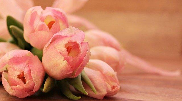 tulips-2068692_640